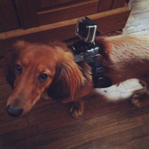 reluctant cameraman